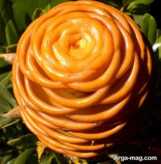 عکس جذاب گل های عجیب