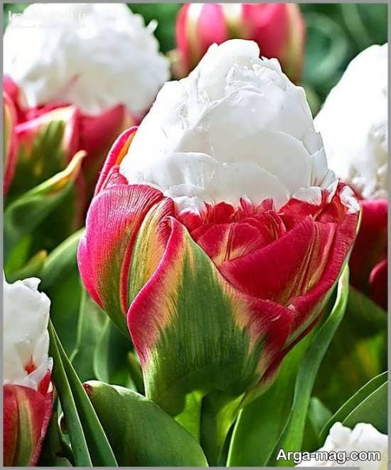 عکس خاصی از گل های عجیب