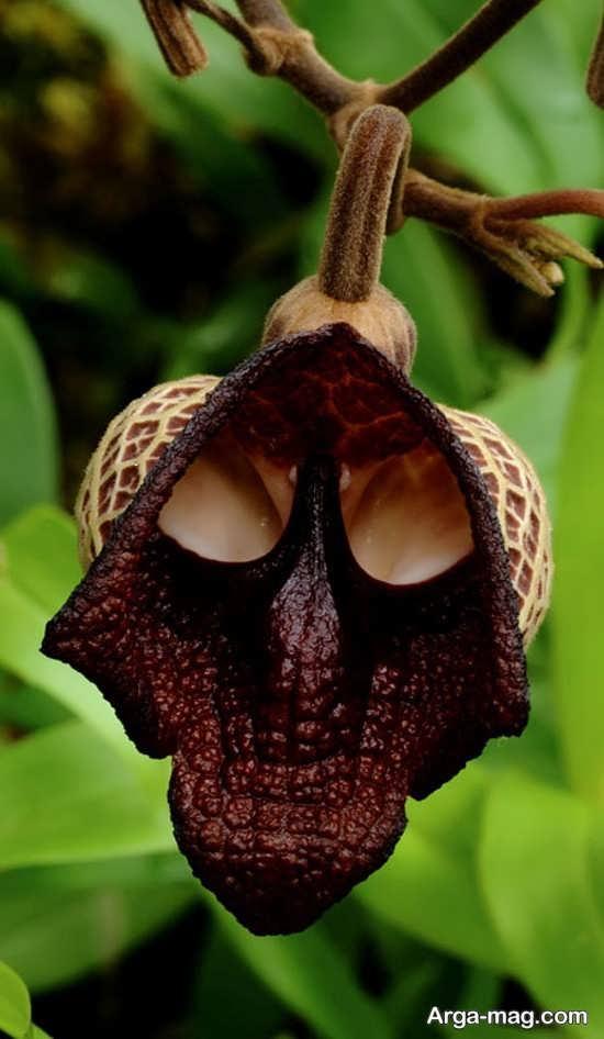 تصویر گل های عجیب