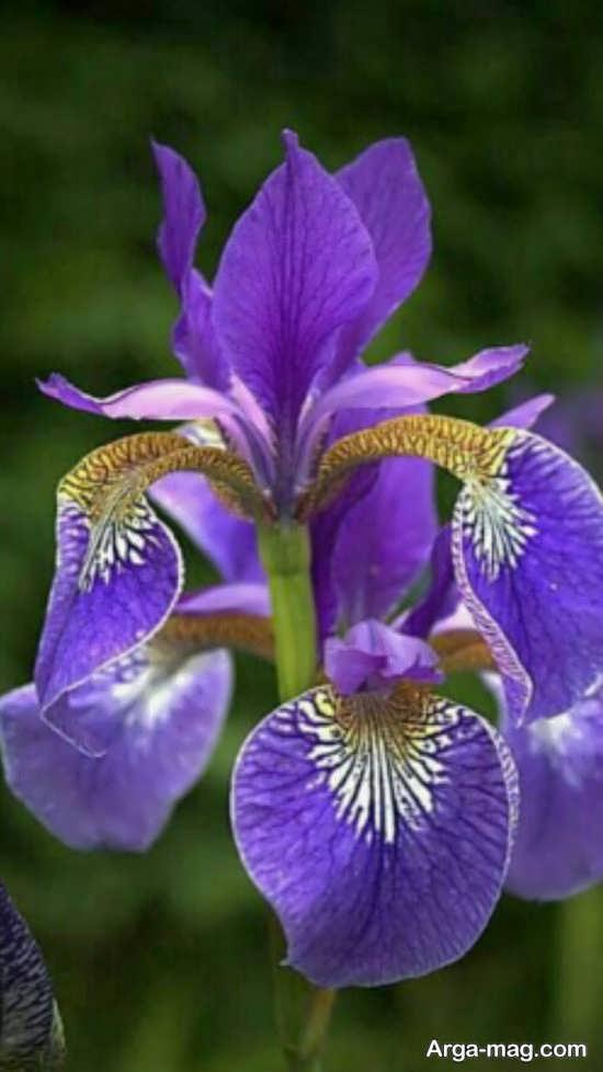 تصویر متفاوتی از گل های عجیب