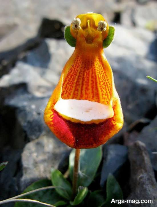 عکس جالب گل های عجیب