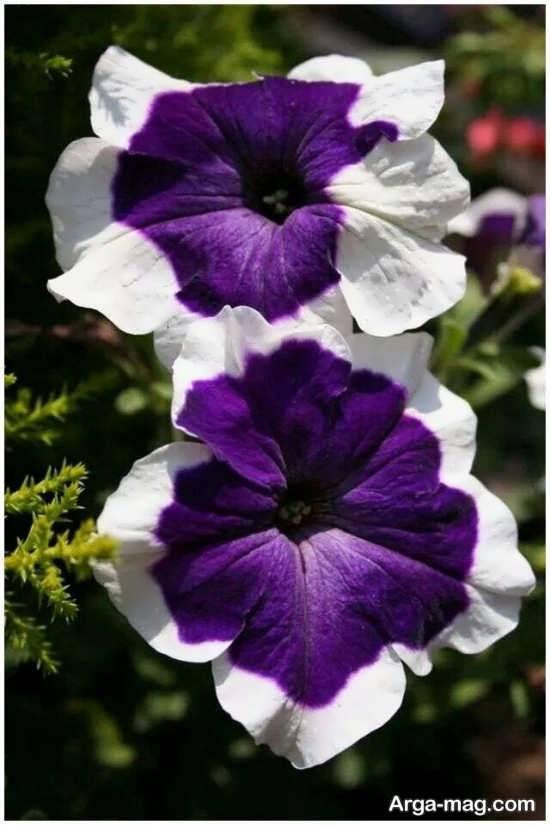 عکس زیبای گل های عجیب