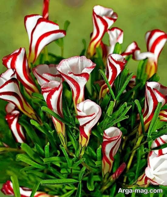 عکس جالبی از گل های عجیب