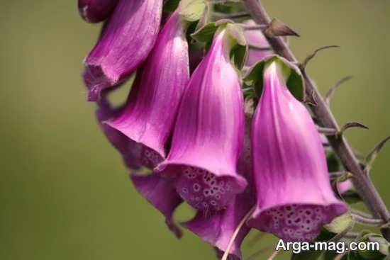 عکس متفاوتی از گل های عجیب
