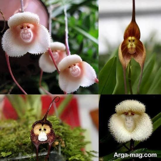 تصاویر زیبایی از گل های عجیب