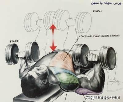استفاده از دمبل برای حرکات ورزشی