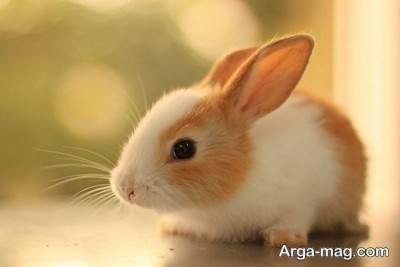 نحوه نگهداری خرگوش در خانه
