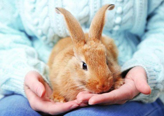آنچه درباره نگهداری خرگوش باید بدانید