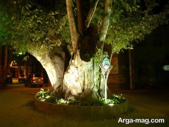 درخت معروف محلات