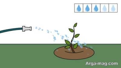 آبیاری درخت بادام
