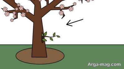 هرس درخت بادام