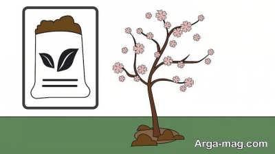 کوددهی درخت بادام