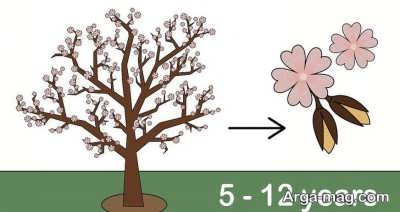 پرورش درخت بادام