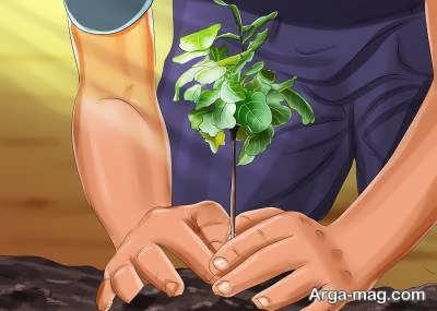 نوردهی برای کاشت درخت انجیر