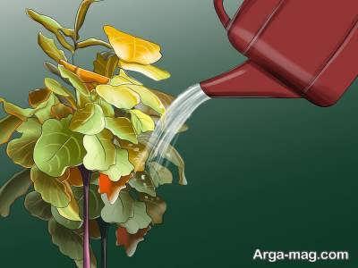 پرورش درخت انجیر
