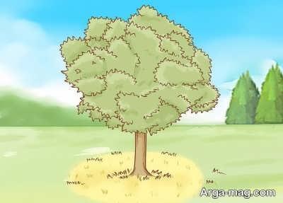 برآمدگی پای درخت