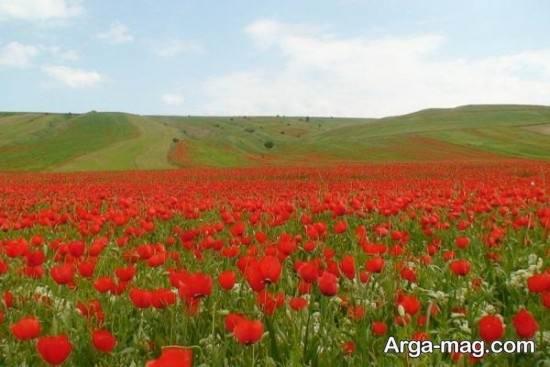 دشت دیدنی شیراز
