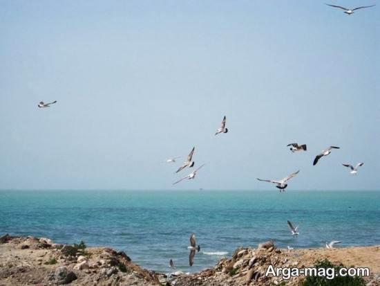 سواحل دیدنی بوشهر