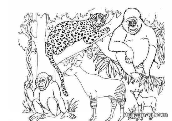 نقاشیهای تماشایی حیوانات جنگل