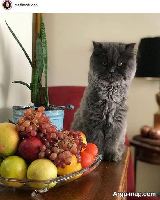 متین ستوده و گربه با جذبه اش