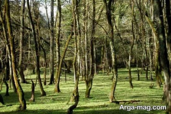 پارک زیبای چالوس