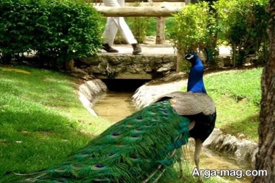 دیدنی های طبعی در اصفهان