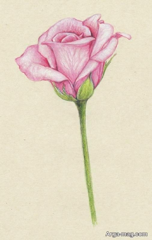 رنگ آمیزی صورتی گل رز