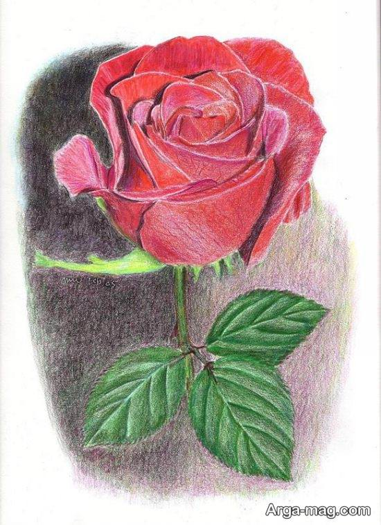 نقاشی ویژه گل رز