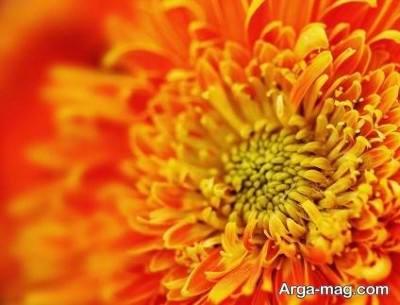 روانشناسی رنگ نارنجی در فرد