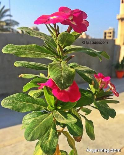 پرورش گل های آپارتمانی
