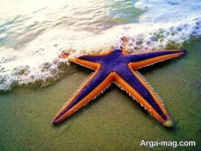 آشنایی با ستاره دریایی