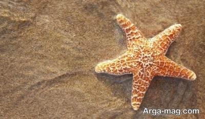 تغذیه ستاره زیبای دریایی
