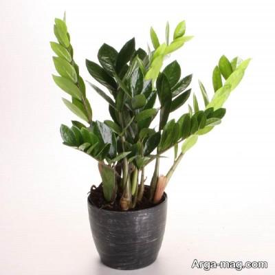 گیاهان آپارتمانی و زیبا
