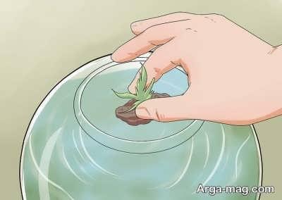 قرار دادن گیاهان در تراریوم