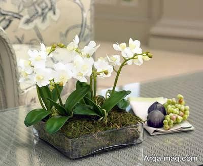 تکثیر و پرورش گل ارکیده