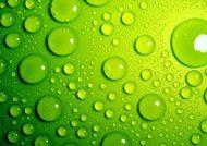 روانشناسی رنگ سبز برای علاقه مندان