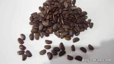 درمان سنگ کلیه با دانه خرمالو