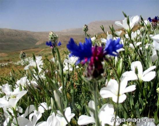 سمیرم شهر خاص اصفهان