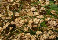 کاشت گلپر با چند مرحله ساده