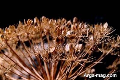 کاشت گلپر نیاز به نورکافی و خاک مناسب