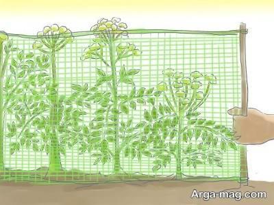 کاشت گیاه گلپر