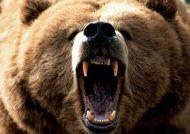 آشنایی با حیوان خرس و گونه های متفاوت آن