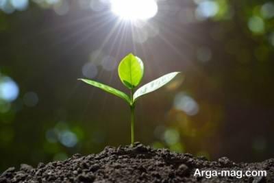 خاک کوکوپیت چیست و چه مزایایی دارد