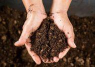 ذکر فواید خاک کوکوپیت برای رشد گیاهان