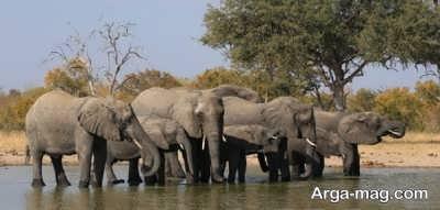 همه چیز در مورد فیل
