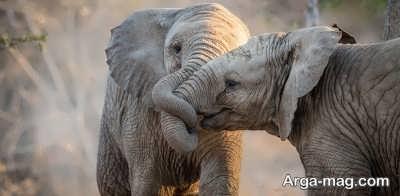اطلاعاتی در مورد فیل