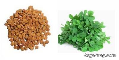 بذر شنبلیله و کاشت آن در منزل