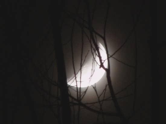 تصویر طبیعت شب