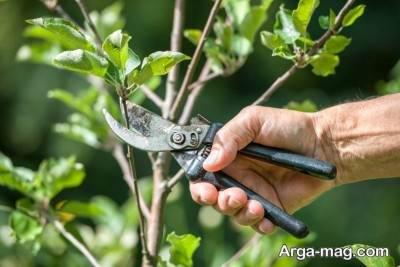 پیوند زدن یک گیاه جوان به درخت دیگر