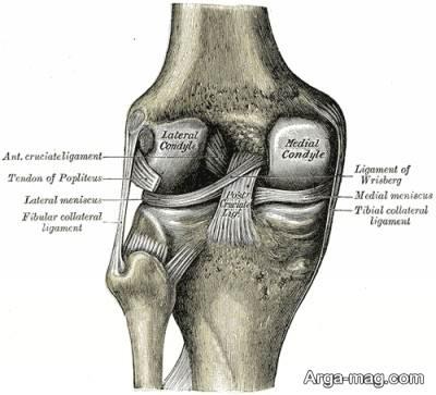انواع رباط ها در مفصل ها
